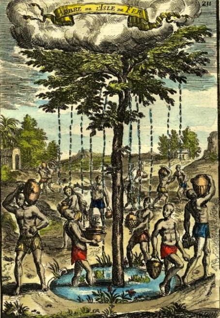 Der Garoé-Baum in einer Radierung aus dem Jahr 1683.
